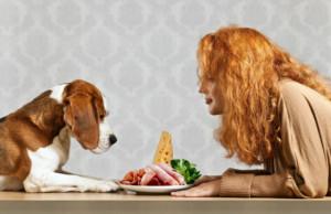 Jak vybrat správné granule pro psa v 8 krocích